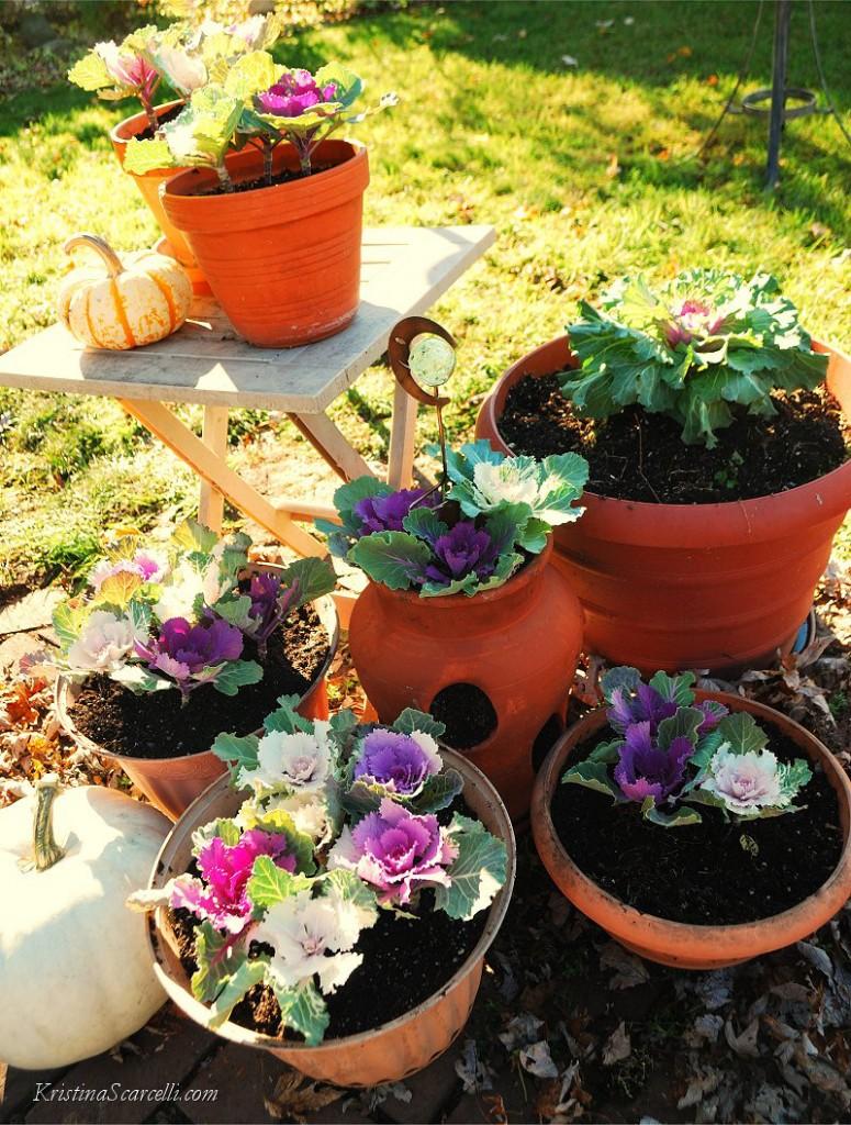 Flowering Cabbage & Kale (1)