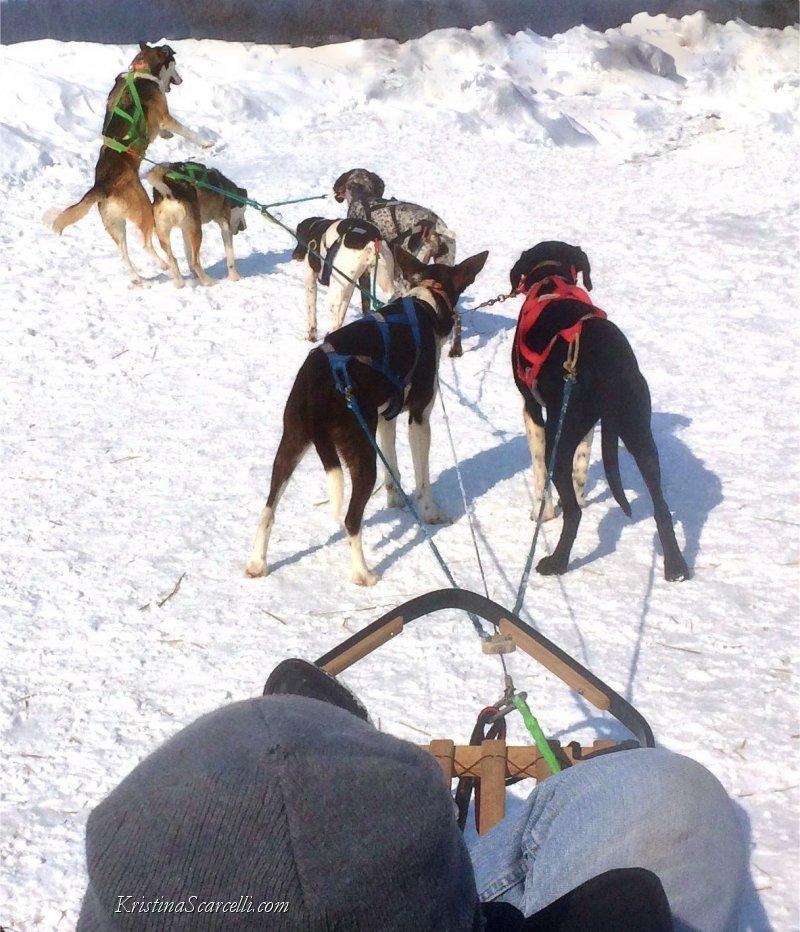 Michigan Dog Sledding Adventure (4)