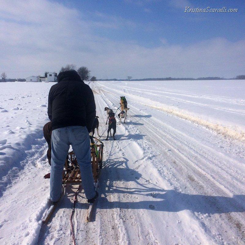Michigan Dog Sledding Adventure (5)
