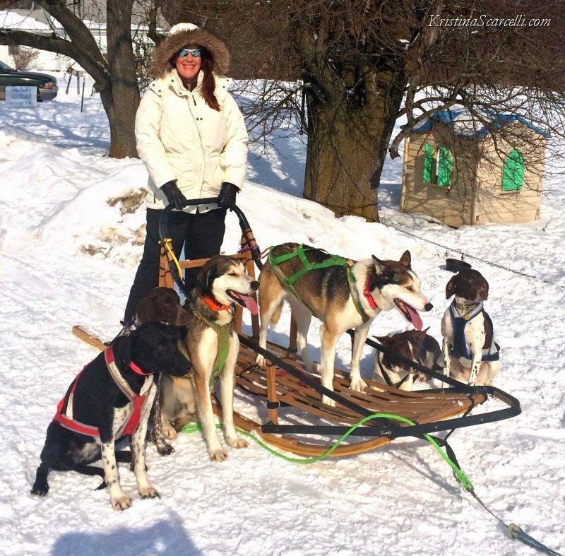 Michigan Dog Sledding Adventure (6)