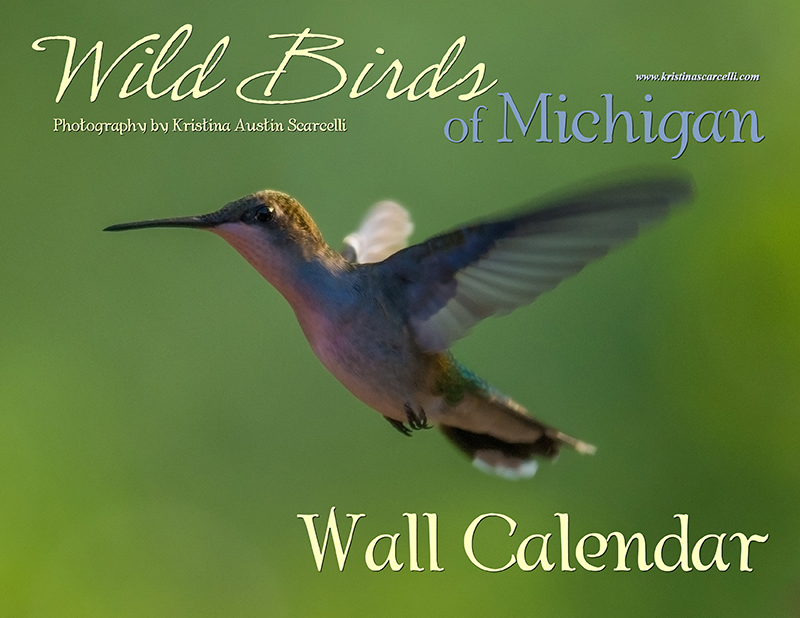 Wild Birds of Michigan Calendar Cover